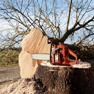 Importance of tree removal in this changing world